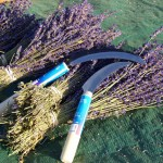 Lavender Supplies Sickle