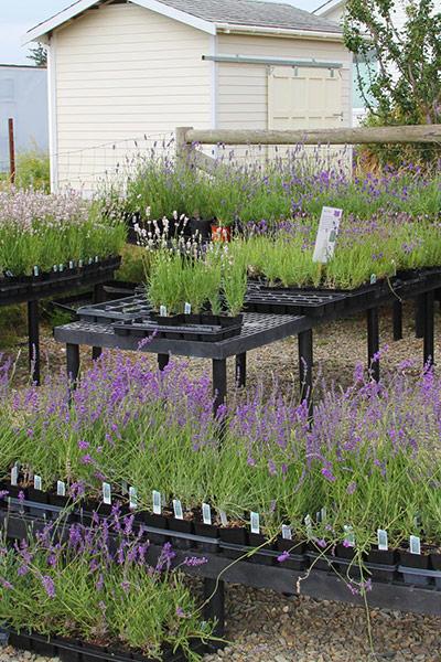 Plants outside store