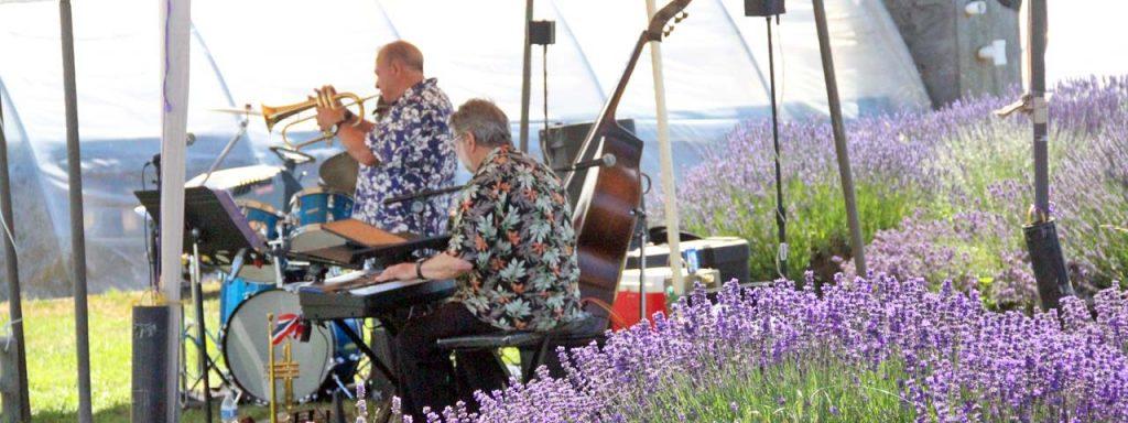 Victor's Lavender Band