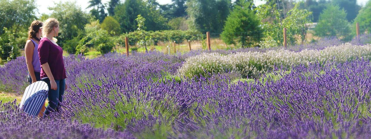 Women in Field of Lavender