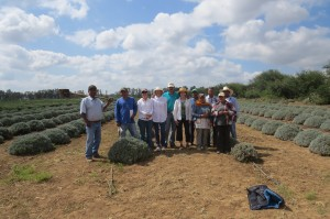 Victor with The Lavender Project Group