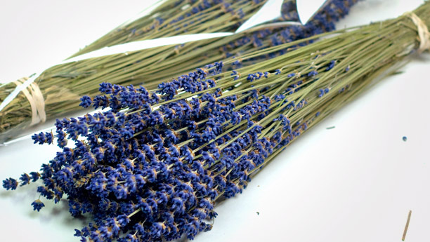 dried-lavender-L