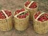 17-strawberries