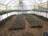 6-the-lavender-project-greenhouse