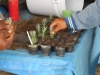 8-the-lavender-project-propagating
