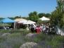Lavender Festivals