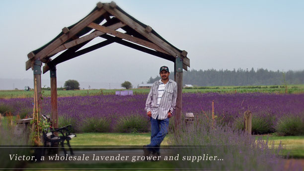 Welcome to Victor's Lavender!
