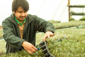 Here is Victor - checking the temperature of the lavender plants.